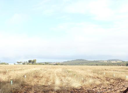 Reforestaciones de Tierras Agrarias