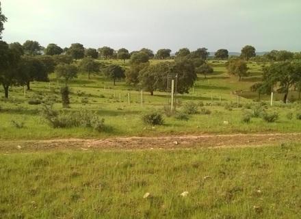 Implantación de sistemas agroforestales