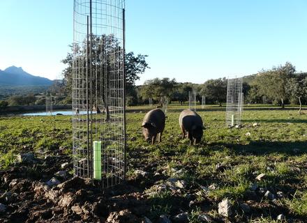 Ayudas a la Implantación de Sistemas Agroforestales en Extremadura