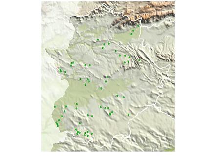 Proyectos o Planes Técnicos de Ordenación de Montes - Instrumentos de Gestión Forestal