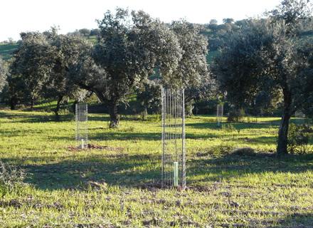 Ayudas a la implantación de sistemas agroforestales, y su mantenimiento, en Extremadura