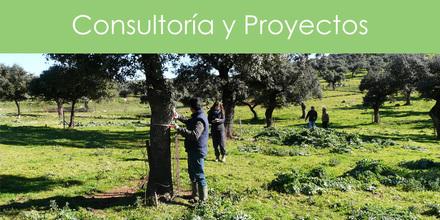 Consultoría y Proyectos